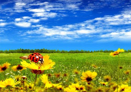 Первый день лета. Божья коровка и поле цветов открытки фото рисунки картинки поздравления