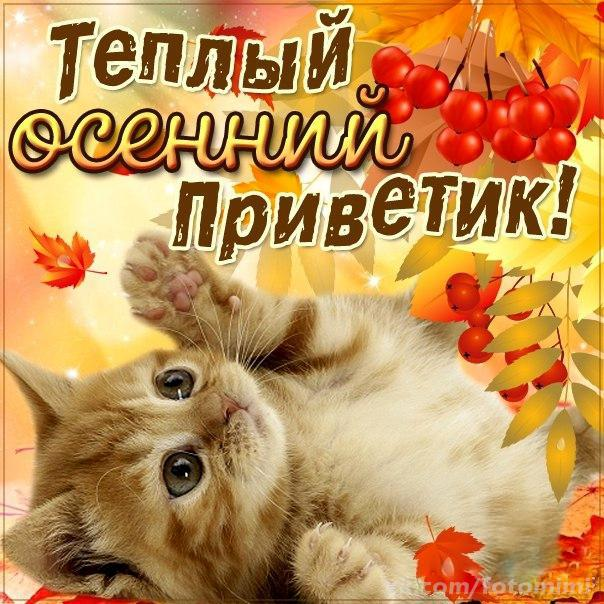 Открытки. Теплый осенний приветик открытки фото рисунки картинки поздравления