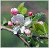 Весна в ущелье Бутаковка. (21)