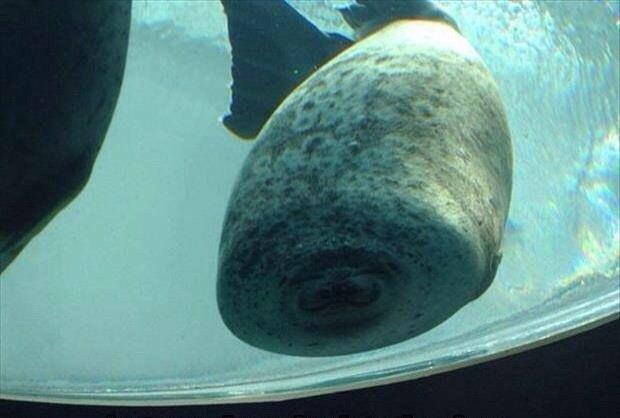 Момент, когда тюлень встречается со стеклом.
