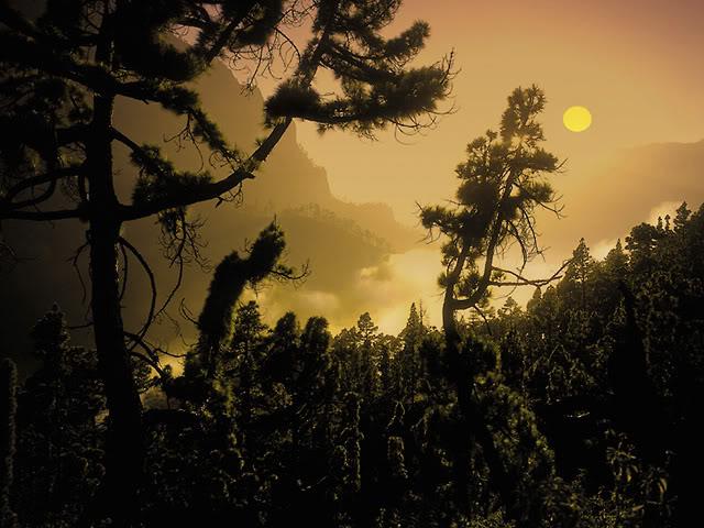 Остров La Palma - основное место жительства Дюваля 0_307a63_6b5ce2f3_orig