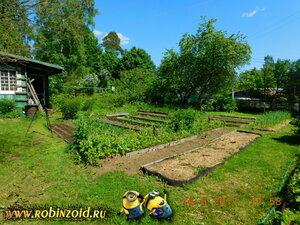огород летом