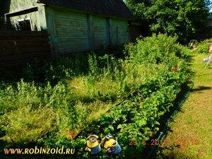 Рассеянный склеротик и много сорняка
