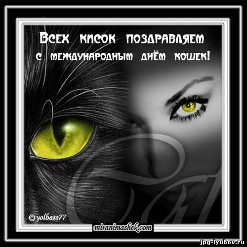Всемирный день кошек 08 августа