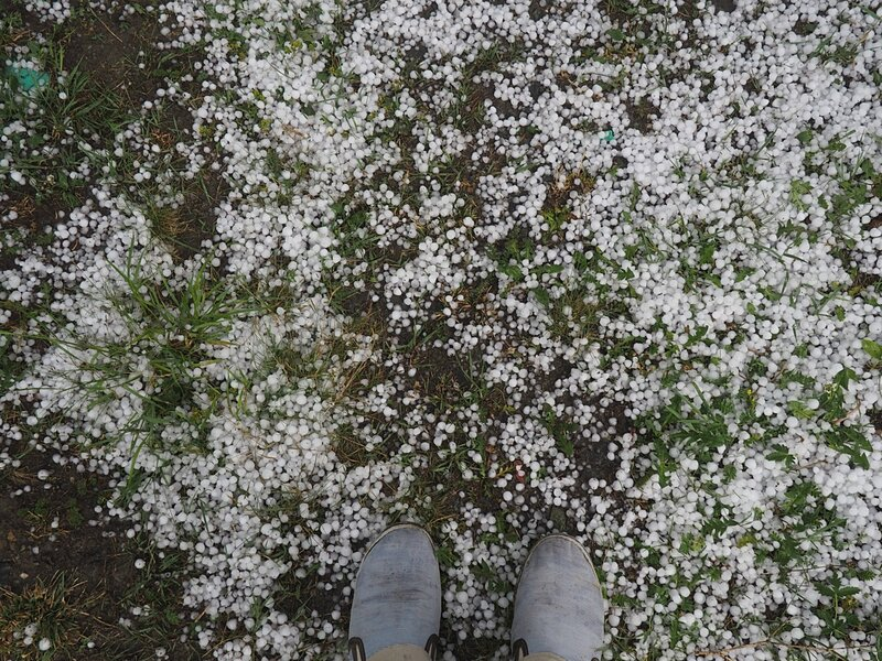 Горный Алтай - после града (Mountain Altai - after hail)