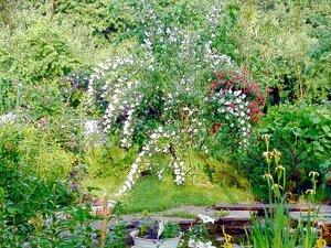 Летом в райском садике