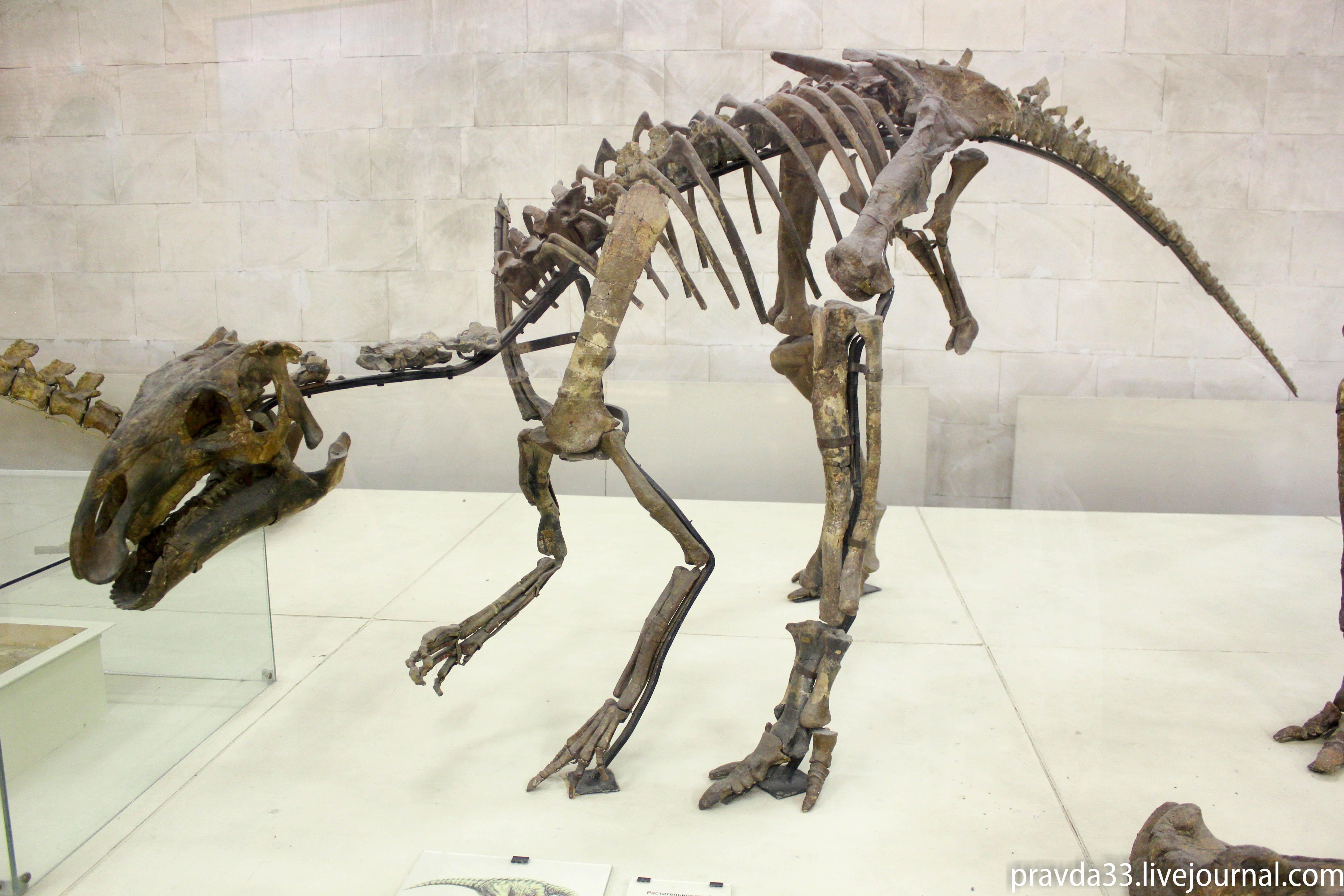 Музей палеонтологии-42.jpg