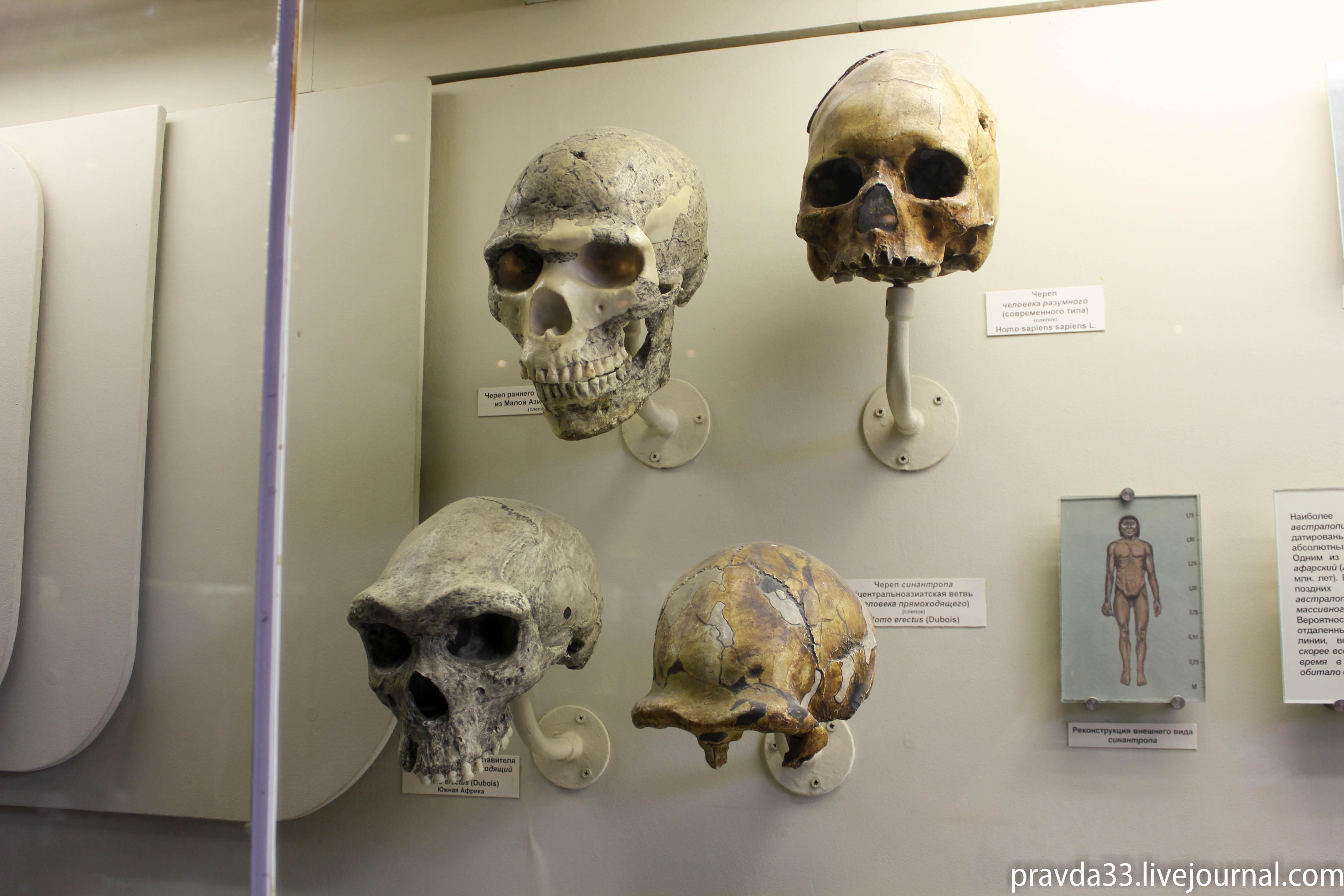 Музей палеонтологии-82.jpg