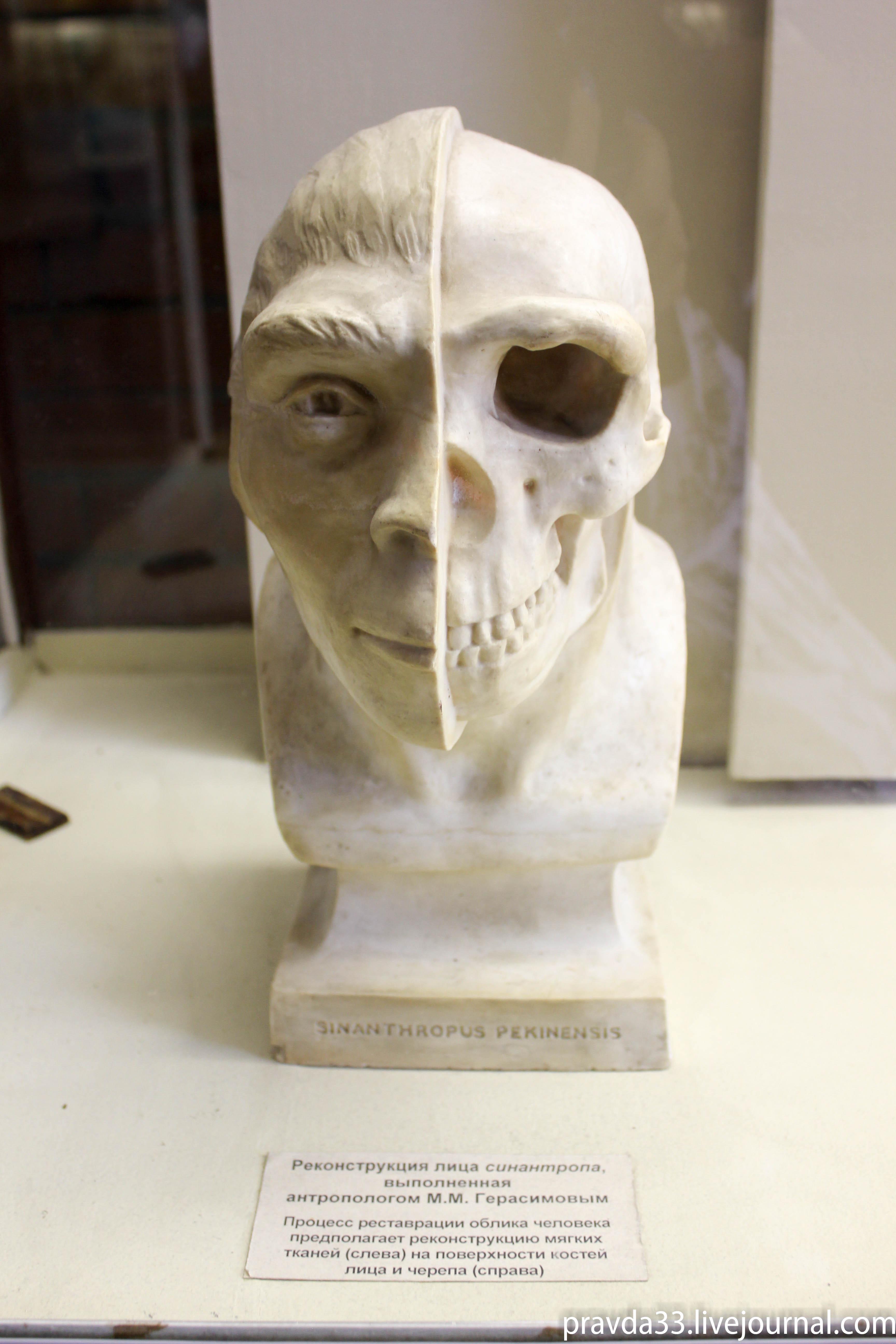 Музей палеонтологии-84.jpg
