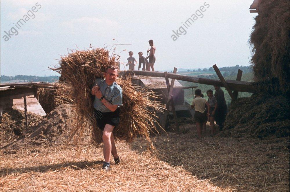 Getreideernte bei Stollberg um 1953 - -