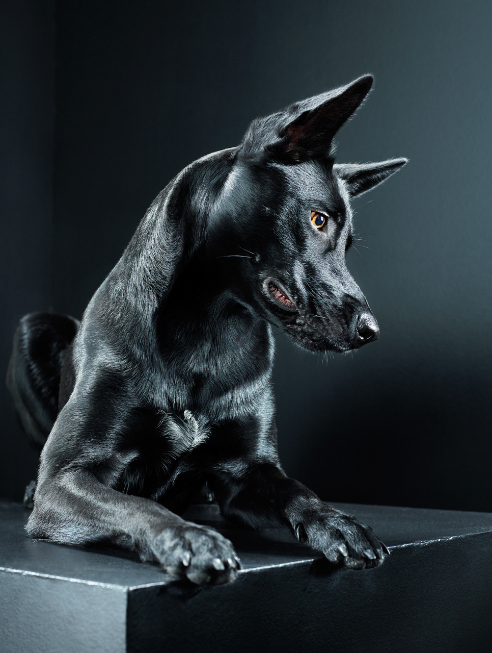 Черная собака / Black Dog - фото Dylan Collard