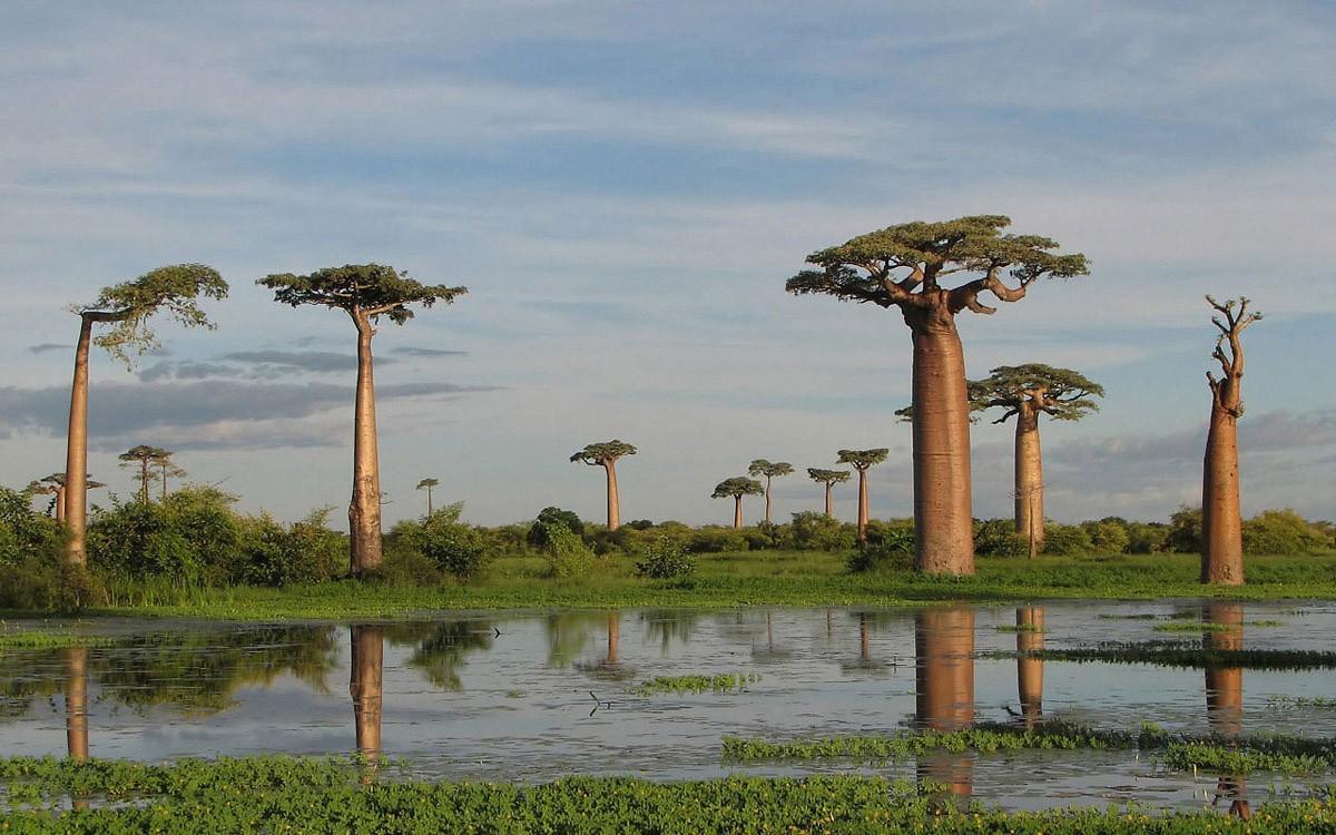 8. Остров Сокотра, Индийский океан Вся крутость острова состоит в том, что он полностью изолирован о