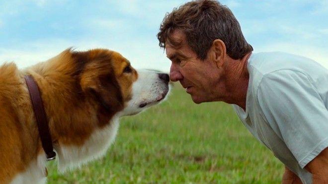 Наша редакция расскажет тебе, какие собаки признаны самыми умными, а какие просто подойдут для радос