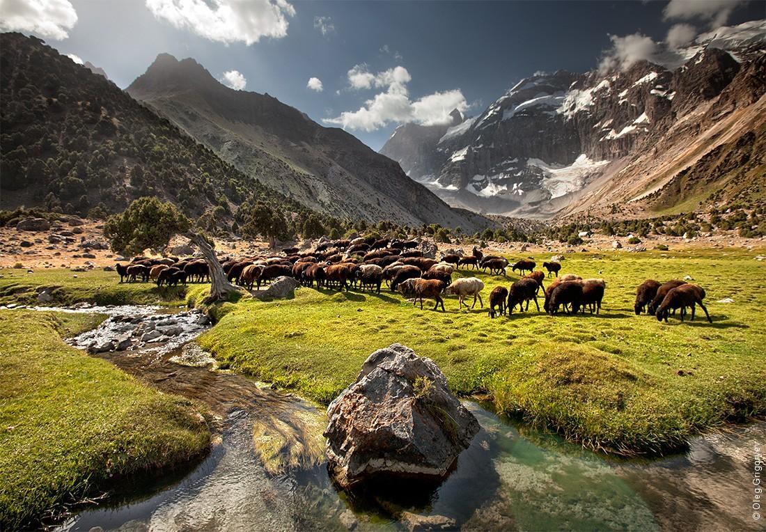 49. Для таджикских баранов и коз это просто эдем, потому что в основном они пасутся на камнях.