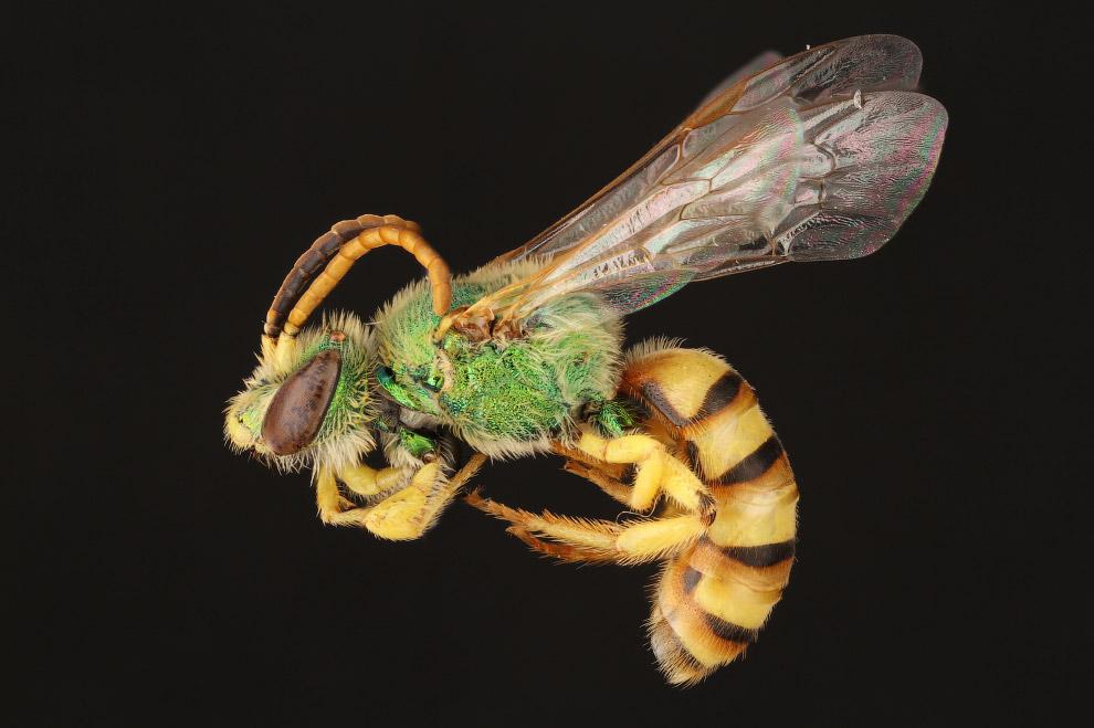 6. Пчёлы — высокоорганизованные насекомые. В частности, общественные пчёлы совместно осуществля