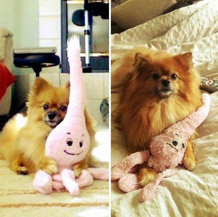 8. Любимая игрушка собаки восемь лет спустя.
