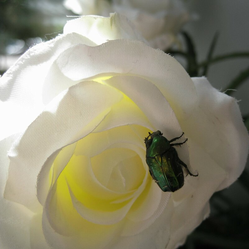 про жука