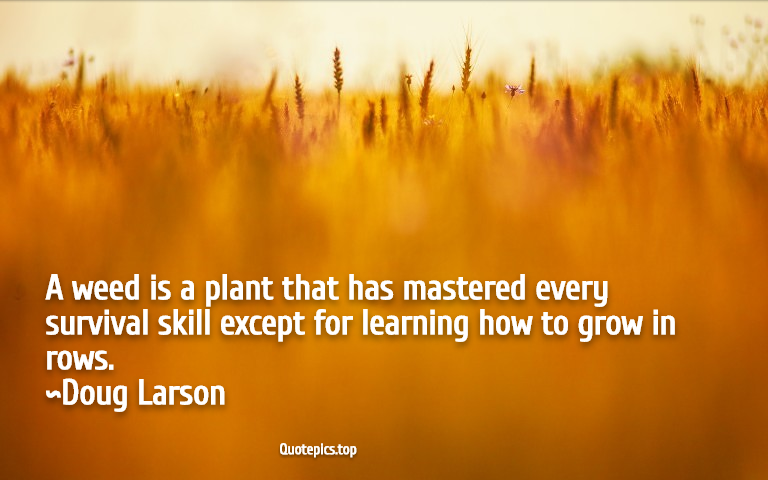 A weed is a plant that has mastered every survival skill except for learning how to grow in rows. ~Doug Larson