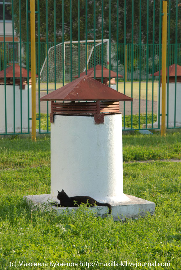 Черный кот на белой трубе