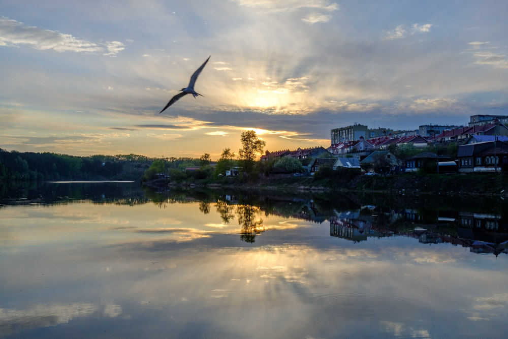 Чайка на закате возле плотины на реке Каменка в городе Каменск-Уральский