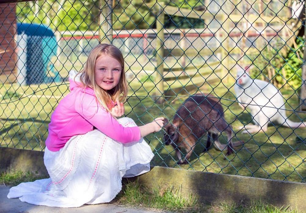 Чтобы осуществить мечту детей, семья переехала жить в зоопарк за £625 тыс. к 300 животным
