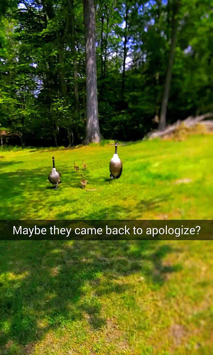 Может быть, они пришли с извинениями?