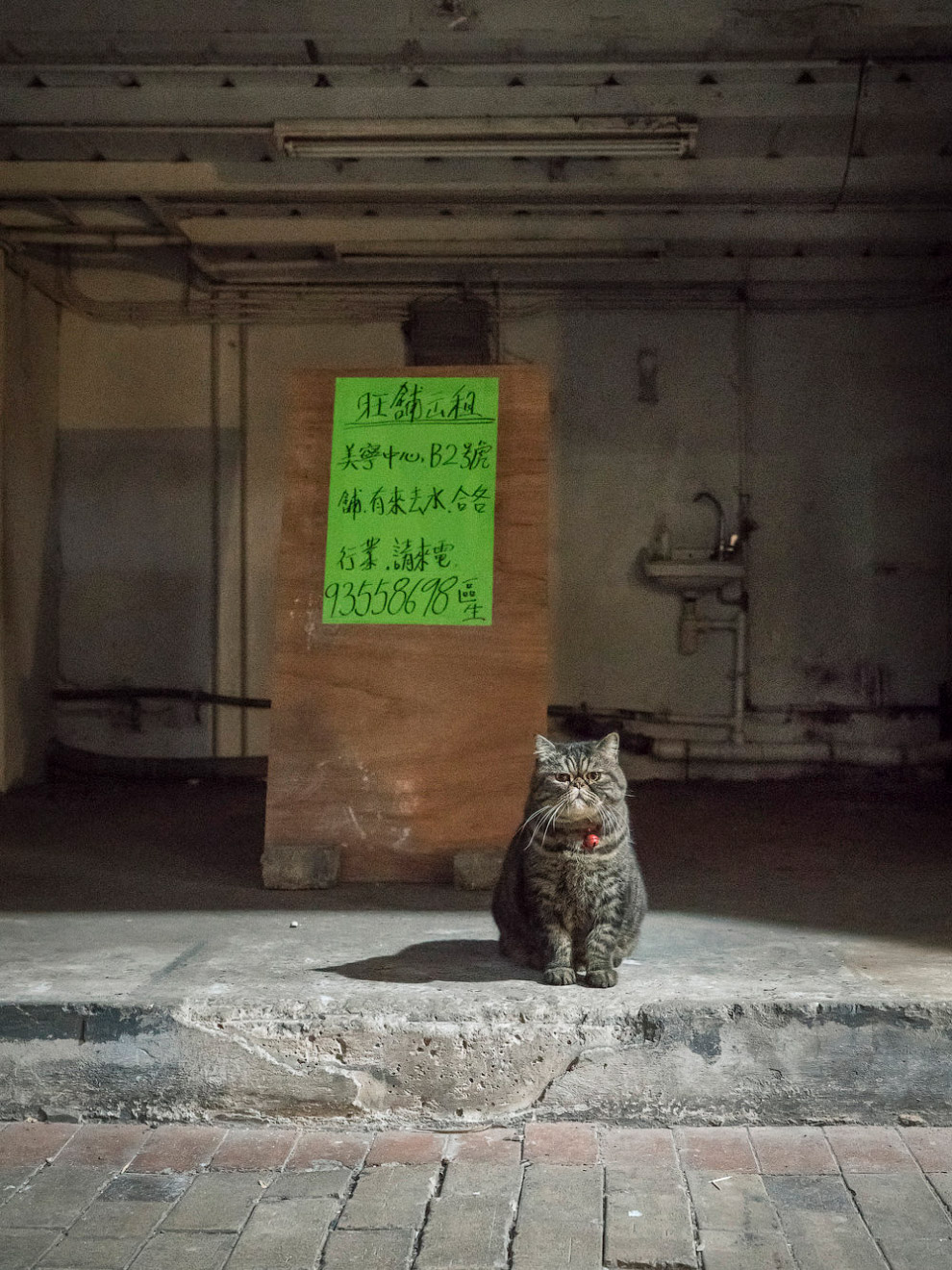 Тайная жизнь домашних животных в магазинах Гонконга (12 фото)