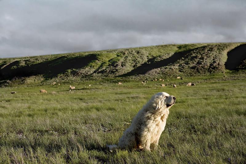 Чэмп, 9 лет, Бьют, Южная Дакота.