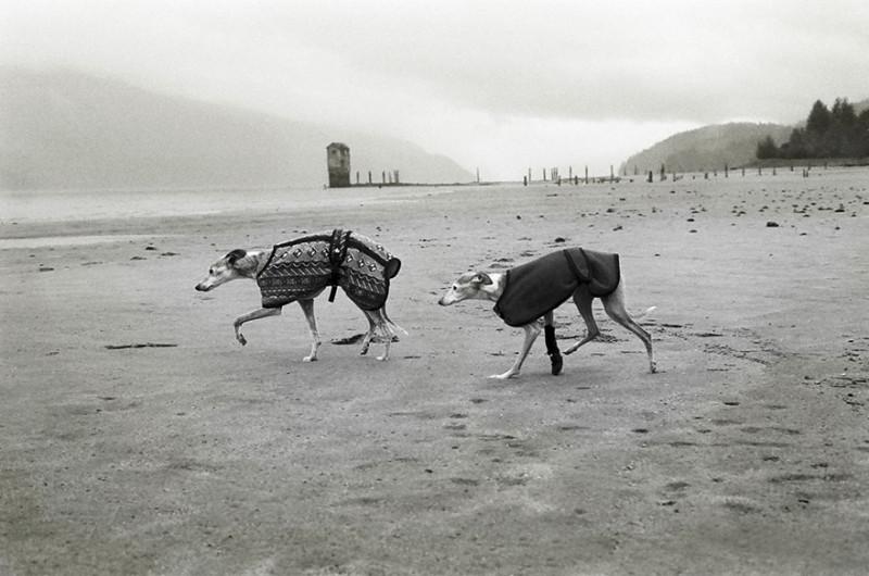 Мэг, 16 лет, и Ява, 14,5 лет, Джуно, Аляска.