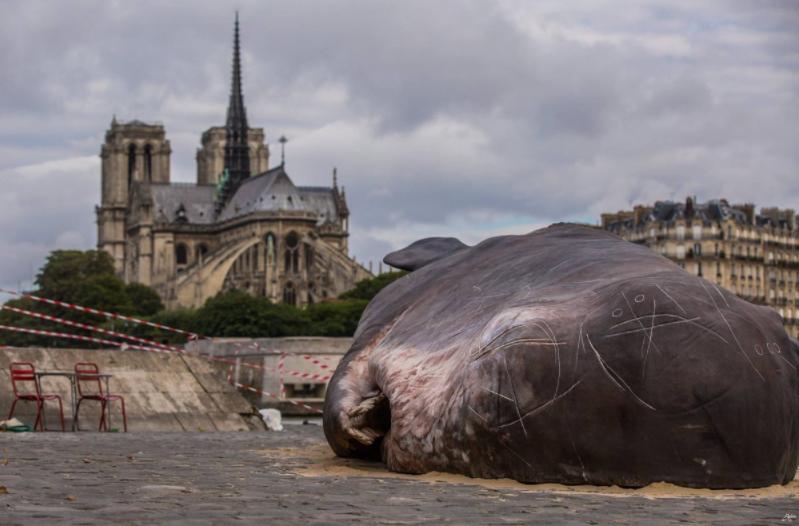 Когда прогуливаешься по городской набережной, встретить мертвого кита довольно неприятно — однако эт