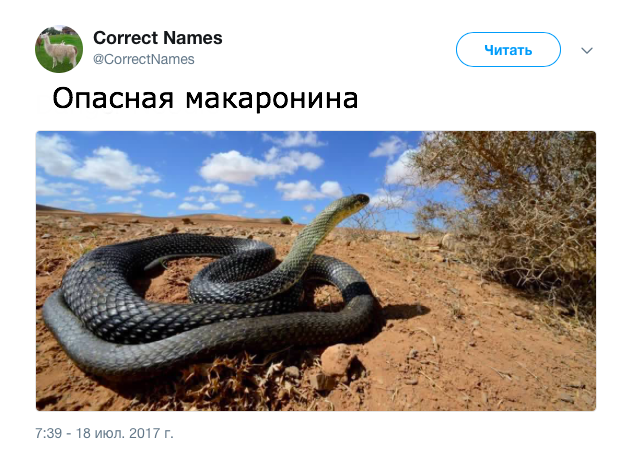 В твиттер-аккаунте дали «правильные» названия привычным вещам (18 фото)