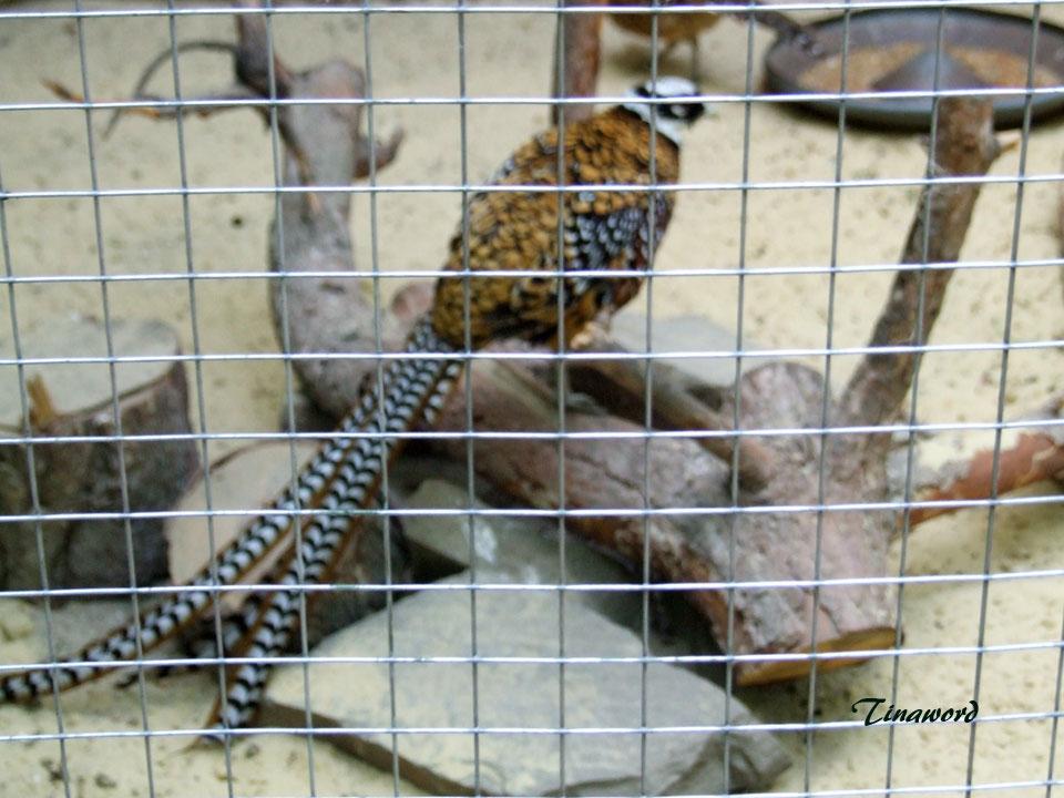 зоопарк-23.jpg
