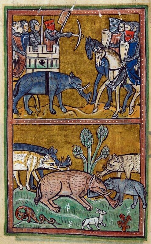 Боевые свиньи средневековья