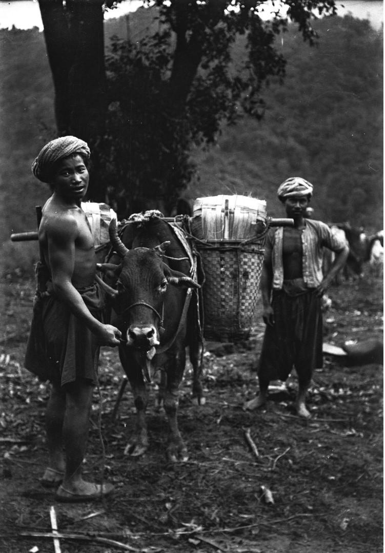 1040. Мужчины с нагруженной коровой