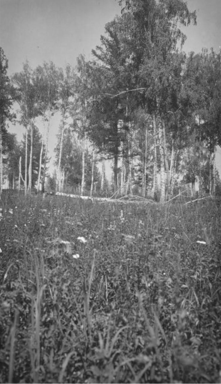 Растительность на холме