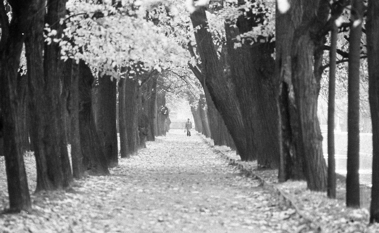 Летний сад. 70-е