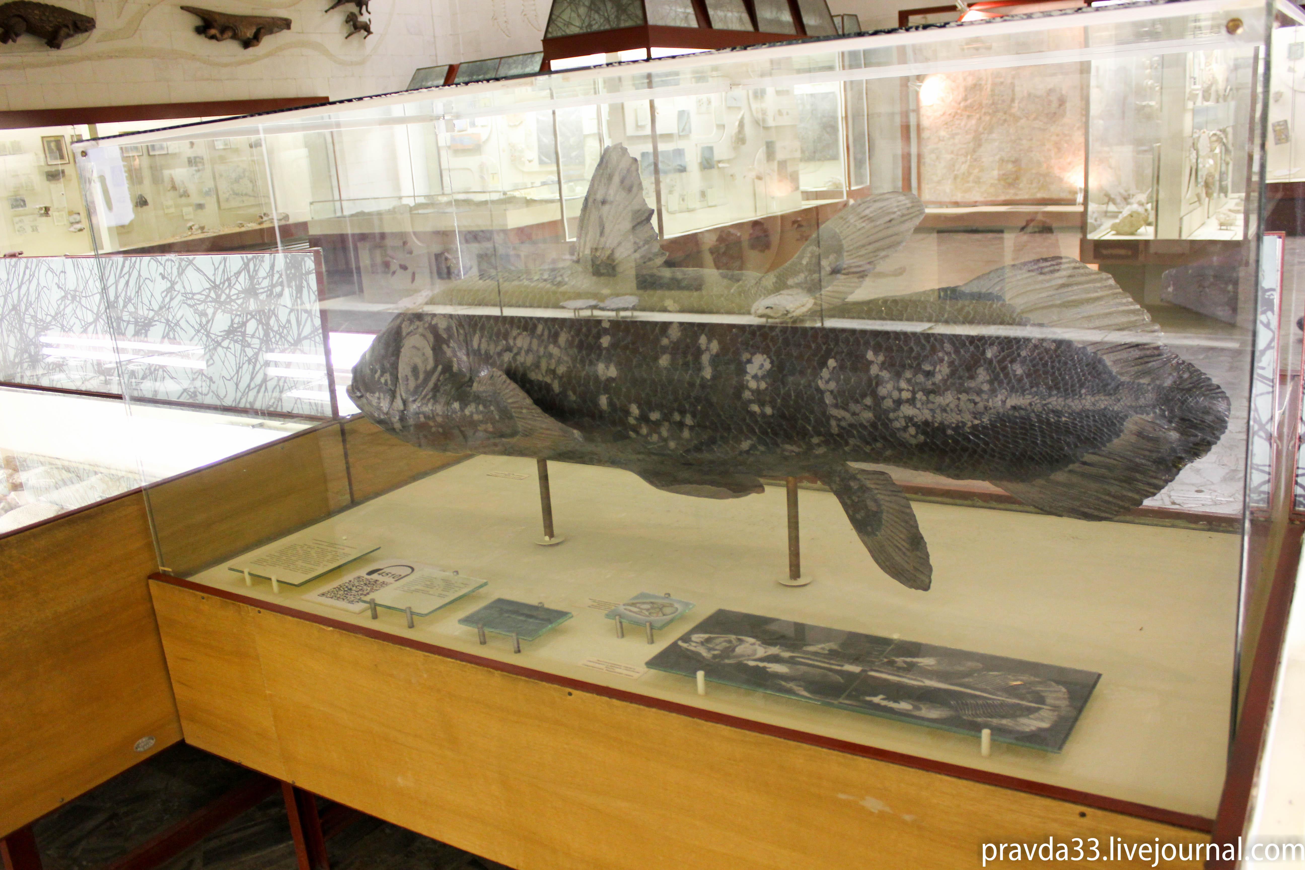 Музей палеонтологии-18.jpg