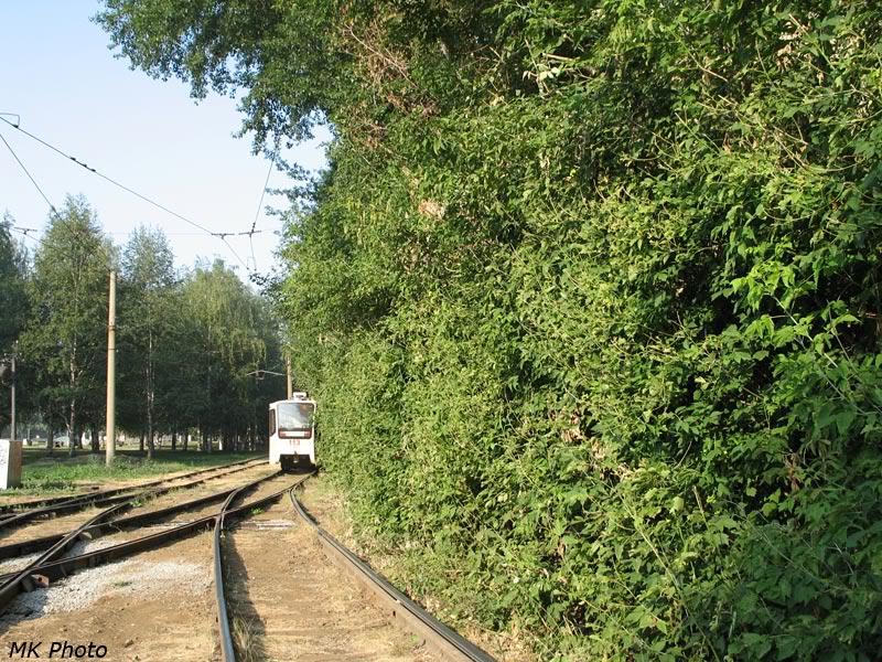 Зелёная стена