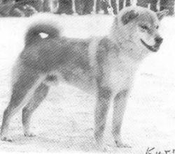 Kiyoichi Go Mie Kozansou.jpg