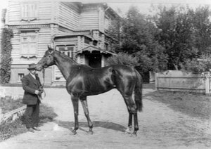 Лошадь Дариал, победитель приза великого князя Дмитрия Константиновича.