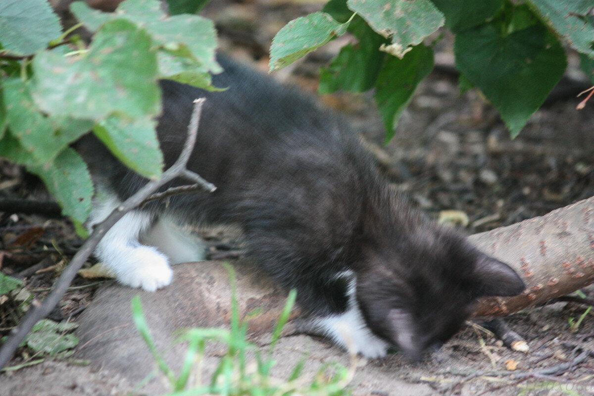Котики-33.jpg