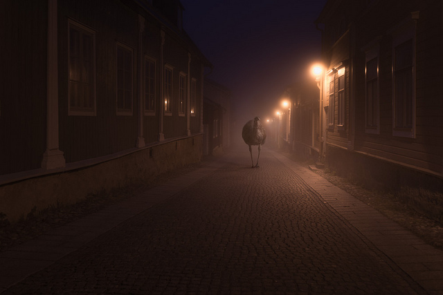 Wild Animals Stalk the Streets of a Small Town in Finland at Night