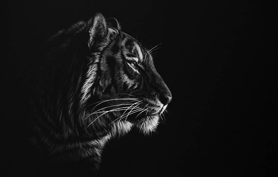 Stunning Realistic Wildlife White on Black Drawings