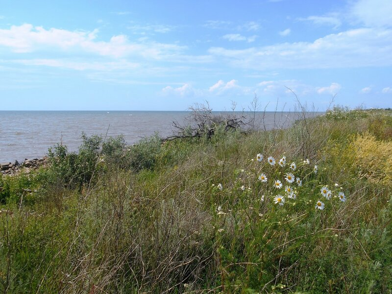 Море, небо... и цветы... DSCN2624.JPG