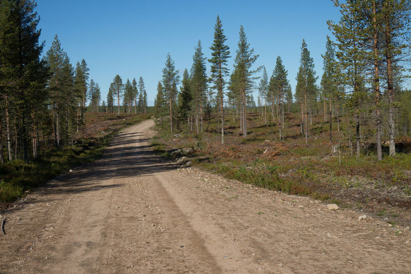 вырубка в финляндии