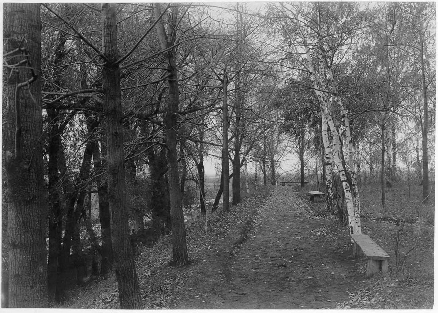 Аллея в Александровском парке