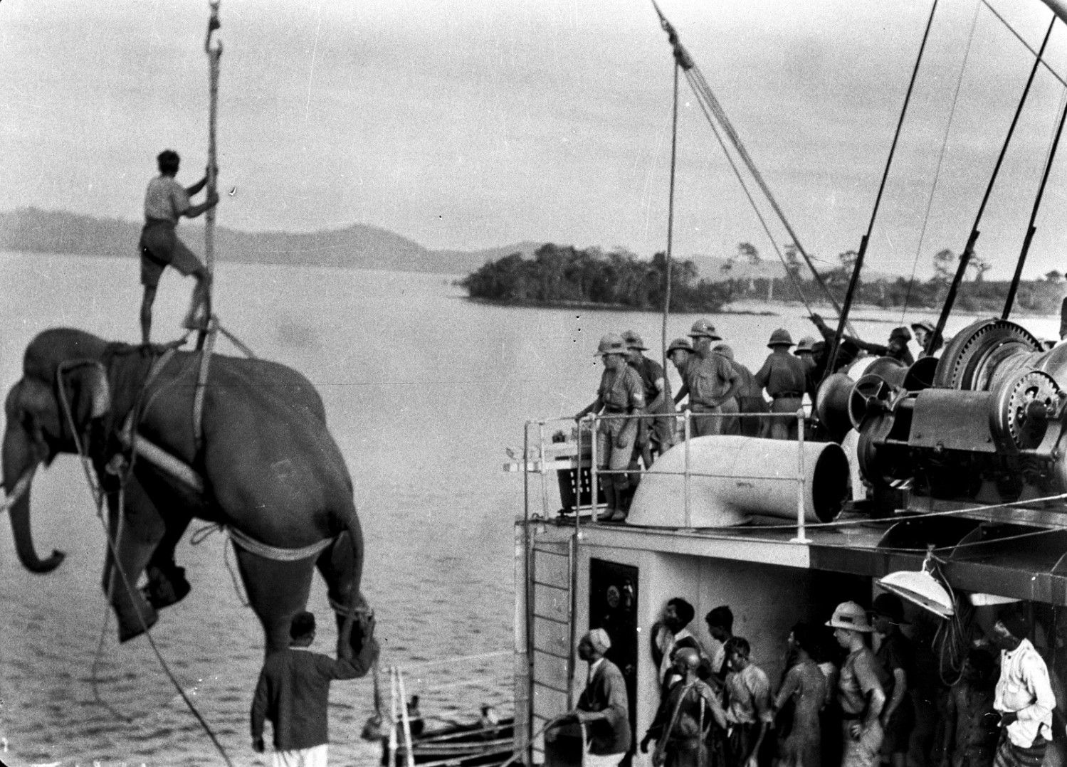 1114. Погрузка слонов