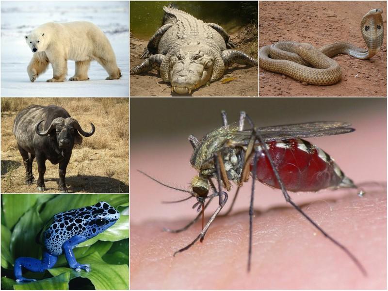 Самые смертоносные животные