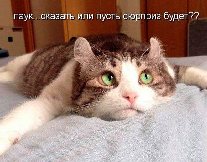 кошки-кошки-11.jpg