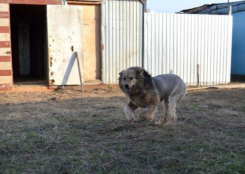 Собака из приюта москва